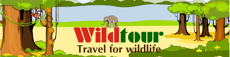 Wildlife Tours & Research