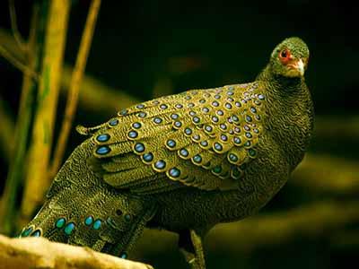 birds-of-cat-tien-national-park