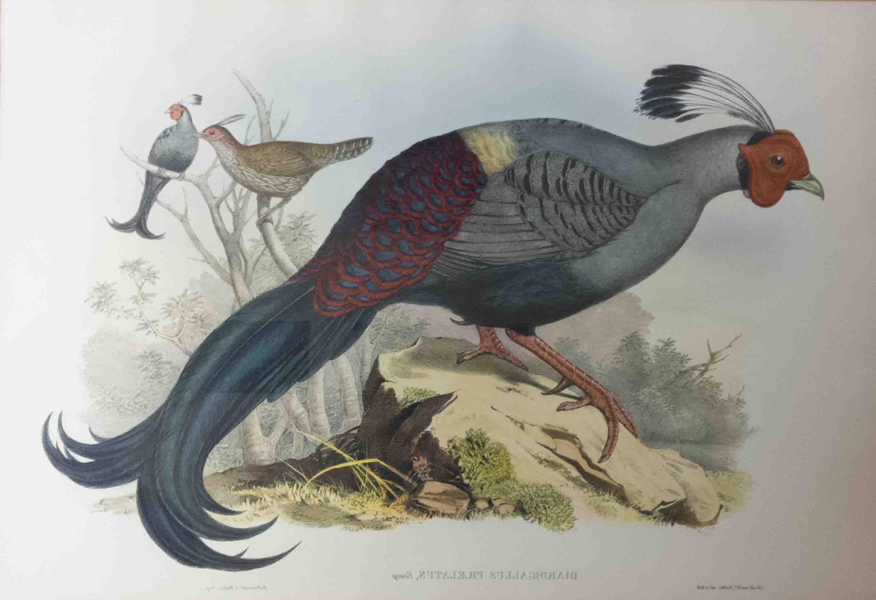 vietnam-ornithological-history