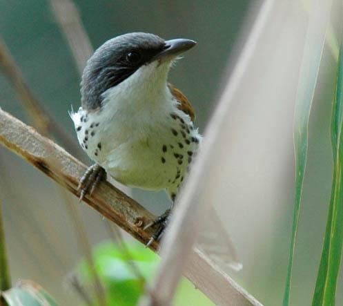 list-of-birds-of-da-lat