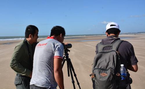 recruitment-project-manager-mekong-delta-shorebird-conservation
