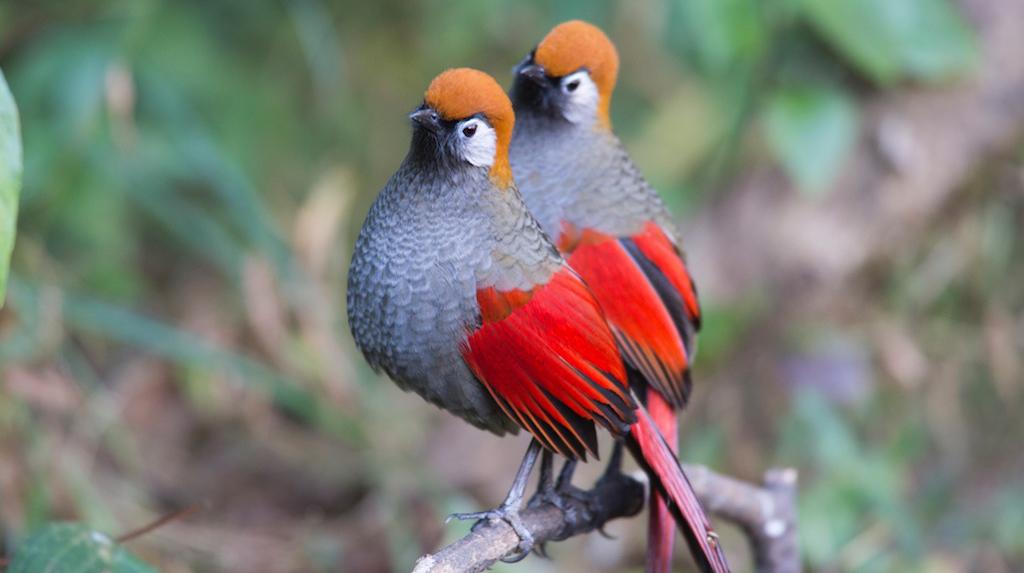 Baihualing, China: Bird Photography
