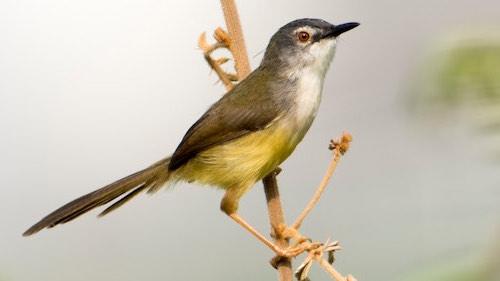 One day birding tour around Ho Chi Minh city