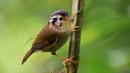 Da Lat birds photography tour